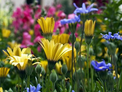 gorgeous-flowers-god-the-creator-17143806-500-375