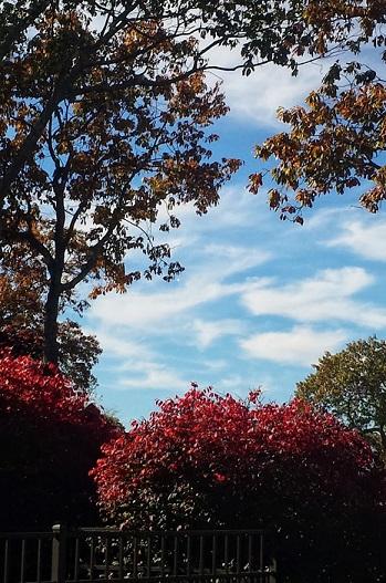 beautiful trees resized
