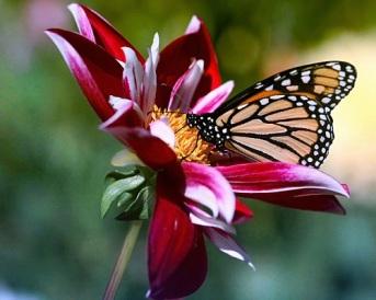 Flowers-and-ButterflyResized-1-YKBWBDE574-1024x768